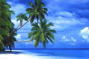 Credit Source:http://www.caribbeancampingcruises.com